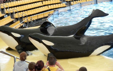 Please, STOP Supporting Seaworld