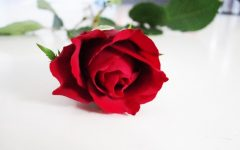 No Final Rose for The Bachelor?
