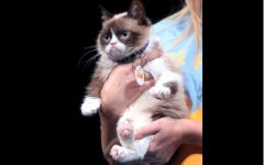 Grumpy Cat Passes Away