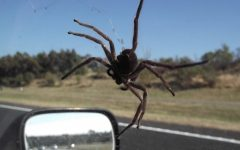 Woman Crashes After a Spider Distracts Her – What Would You Do?