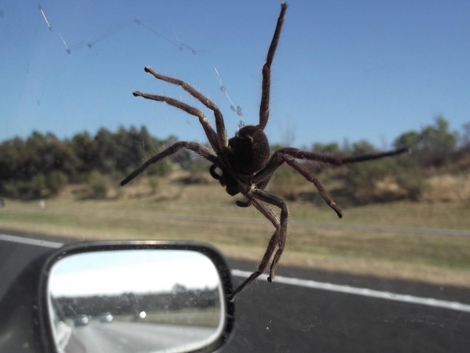 What would you do if you saw a spider crawling around in your car?