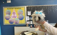 The Serenity Room gives students and staff a chance to unwind and hang out with Tinkerbell, the rabbit.