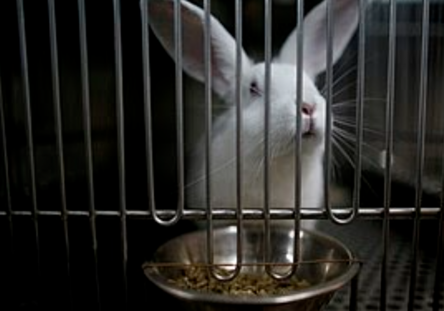 An animal's purpose shouldn't be to be tested on for our sake, nor should they be locked up all day.